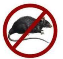 rat_lassa